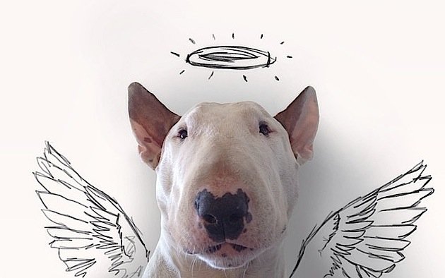 snygo_files004-rafael-mantessos-hilarious-sketches-of-bull-terrier